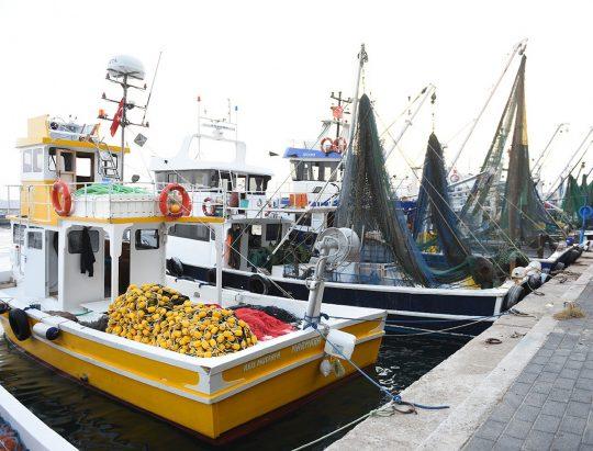Marmara ve Avşa Adası
